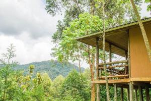 Ichumbi Gorilla Lodge, Лоджи  Kisoro - big - 55