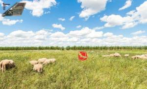 Farm stay Orlov put, Bauernhöfe  Bilje - big - 62