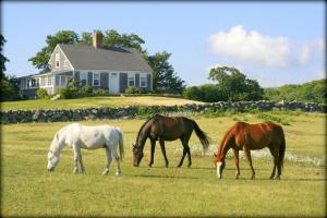 Menemsha Inn & Cottages (29 of 40)