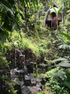 obrázek - Jungle Dream