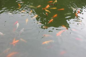 金荷之家, Appartamenti  Zhoushan - big - 202