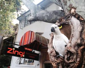 Zing Backpackers - Sydney