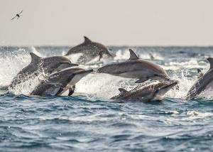 Dolphin Beach Resort (8 of 123)