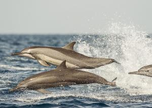 Dolphin Beach Resort (19 of 122)