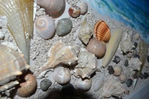 Kela's Seashell Studio - Kaninë