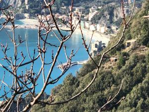 Zia Letizia Bed And Wine, Penziony  Monterosso al Mare - big - 126