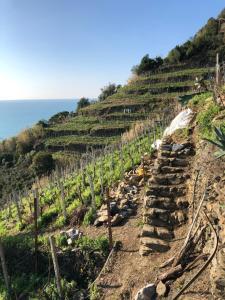 Zia Letizia Bed And Wine, Penziony  Monterosso al Mare - big - 118