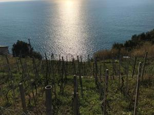 Zia Letizia Bed And Wine, Penziony  Monterosso al Mare - big - 115