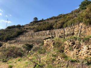 Zia Letizia Bed And Wine, Penziony  Monterosso al Mare - big - 113