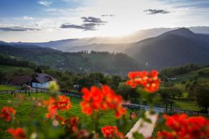Bran Monte Crai Chalet, Guest houses - Bran