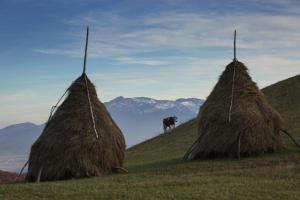 Bran Monte Crai Chalet, Penzióny  Bran - big - 57