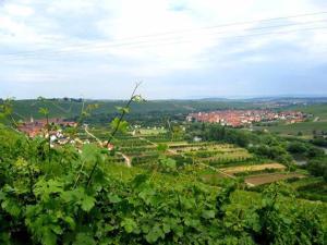 Ferien- und Winzerhof Ute Braun - Escherndorf