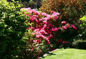 Eleanor Gorrie B & B, Bed and Breakfasts  Nelson - big - 9