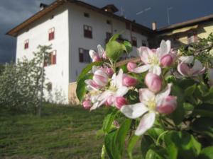 Agritur Maso San Bartolomeo, Farmy  Romeno - big - 28