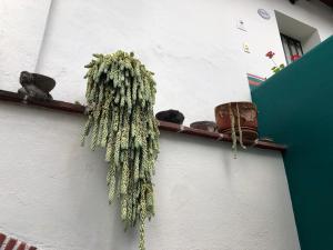 Meson del Penasco, Apartmány  Oaxaca City - big - 26