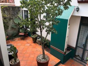 Meson del Penasco, Apartmány  Oaxaca City - big - 31