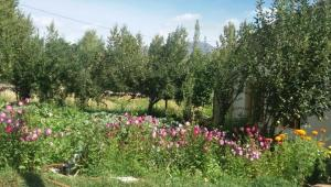 Tsashung Homestay,Hunder Nubra,Leh Ladakh, Magánszobák  Leh - big - 19
