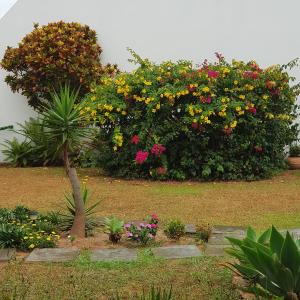 IDP204- APARTAMENTO DE 2 DORMITORIOS NO INGLESES, Ferienwohnungen  Florianópolis - big - 10