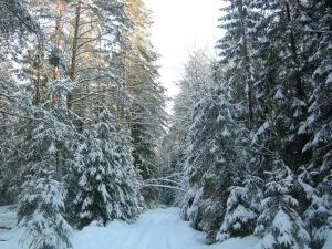 Paradis, Vidiecke domy  Borovlyany - big - 23