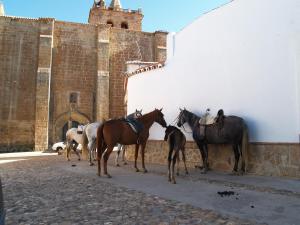 Casa Rural Las Nieves, Kúriák  Garrovillas - big - 18