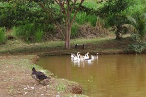 Fazenda Serra Verde Carangola, Guest houses  São Manuel de Carangola - big - 25