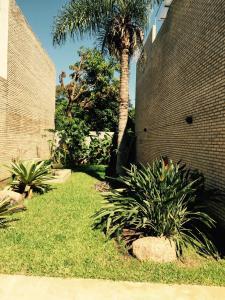 Madre Natura, Apartments  Asuncion - big - 165