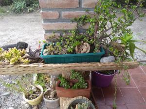 Apapachar, Prázdninové domy  Amaichá del Valle - big - 32