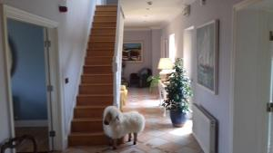 Fiuise B&B, Bed and Breakfasts  Dingle - big - 50