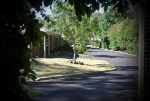 Eltham Motor Inn, Motelek  Eltham - big - 19