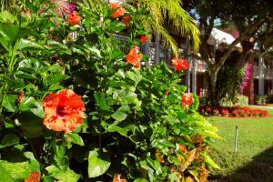 Ramada by Wyndham Naples, Hotely  Naples - big - 68