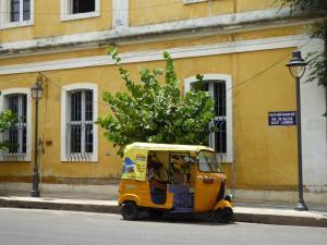 Auberges de jeunesse - Lemon Tree