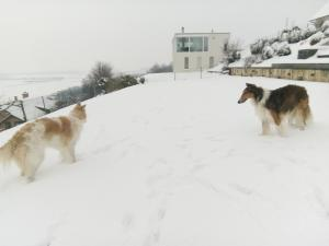 Swiss Borzoi House, Bed and Breakfasts  Bellerive - big - 54