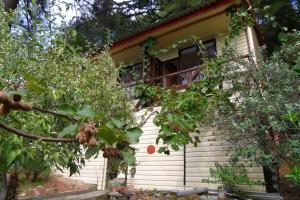 Гостевой дом Сосновый Бор в Чемитоквадже