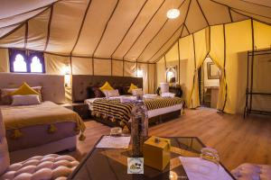 Luxury oasis camp