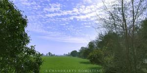 Auberges de jeunesse - Chaudhary\'s Homestead