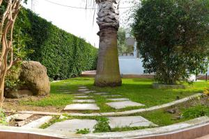 Patras Palm Tree Achaia Greece