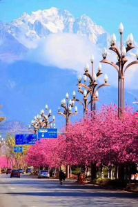 Flower Mirage Inn, Pensionen  Lijiang - big - 46