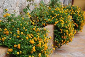 Villa Angela, Hotels  Taormina - big - 23