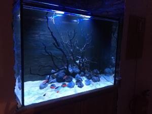 Aquarium House, Sesimbra
