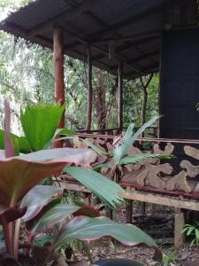 El Perezoso Lodge - Mogos