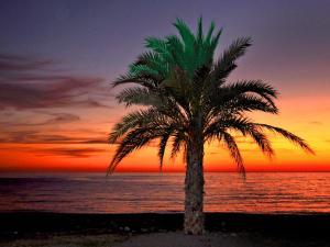 Arrayanes Playa, Hotels  Almuñécar - big - 15