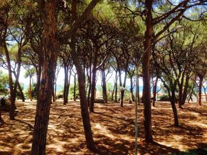 obrázek - Via Cimarosa