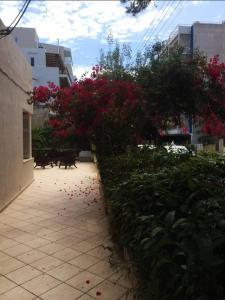 Spacious house next to Athens' coast, in Kalamaki, Apartments  Athens - big - 18