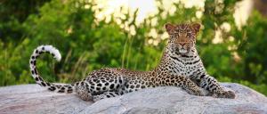 Motswari Private Game Reserve (30 of 31)
