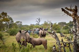 Motswari Private Game Reserve (27 of 31)