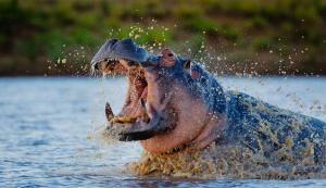 Motswari Private Game Reserve (25 of 31)