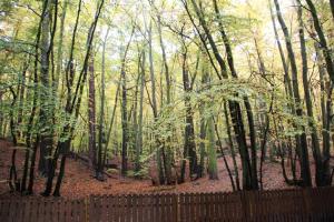 hostel leśny