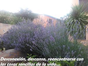 Pou De Beca Allotjaments i agroturisme, Agriturismi  Vall d'Alba - big - 21