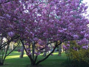 obrázek - Le parc de l'Hermitage