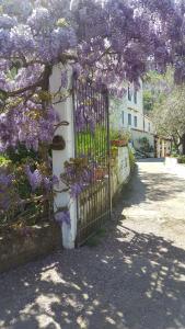 Gli Ulivi Agriturismo, Agriturismi  Sant'Agnello - big - 102